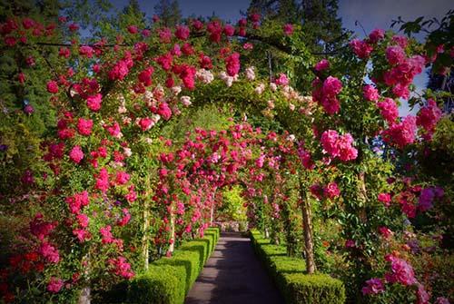 Butchart garden image